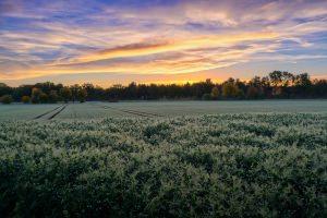 Застрояване върху земеделски земи